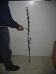 flores en bronce